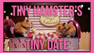 Repeat youtube video Tiny Hamster's Tiny Date (Ep. 5)