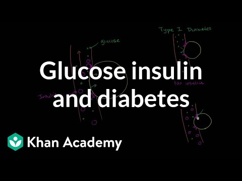 Glucose Insulin and Diabetes