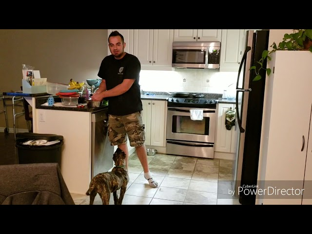 Part 2: How to train your Presa puppy Sit, Stand & Down