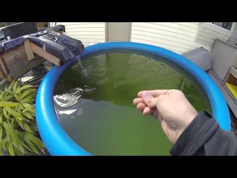 Algae Aquaponics 3-16