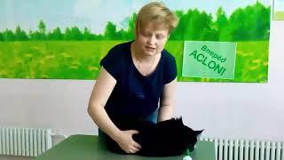 Отзыв Сыч Татьяны (партнер ACLON) про своего котенка (породы мейн кун), г. Омск