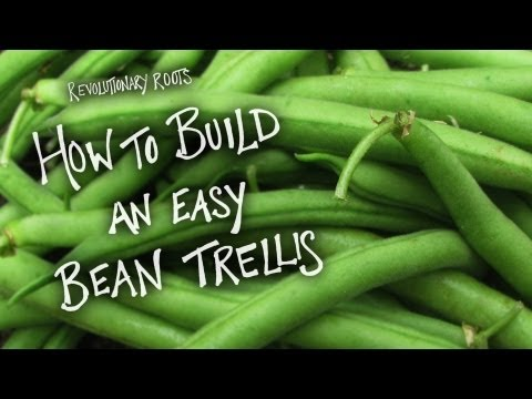 how-to-build-an-easy-bean-trellis---farming/gardening-lesson---revolutionary-roots