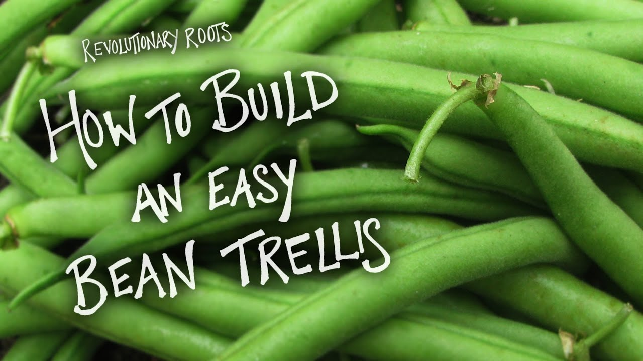 Simple Trellis Ideas Part - 44: How To Build An Easy Bean Trellis - Farming/Gardening Lesson -  Revolutionary Roots - YouTube