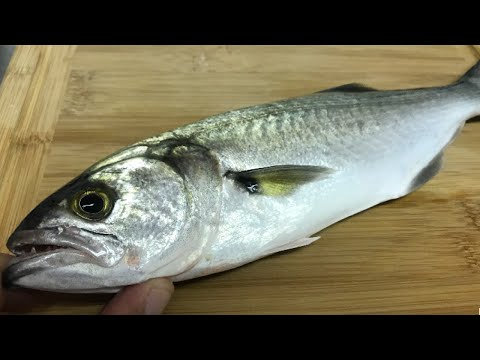 CATCH, CLEAN, & COOK: Nasty Bluefish...?