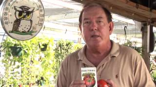 How to Grow Heirloom Tomatoes in Containers