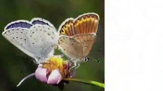 Секрет успеха! Урок бабочки!