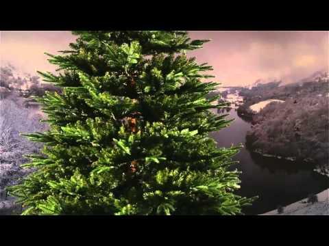 national-tree-fraser-fir-deluxe-7-ft