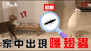 【豆漿 - SoybeanMilk】嚇死人 俊榮差點吃隱翅蟲