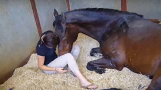 लड़की और घोड़े के बीच ऐसे सम्बन्ध पहले कभी नहीं देखि होगी आपने    देखे