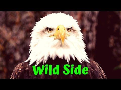 Wild Side of rock🎸 #heavymetal #rocknroll #rockmusic