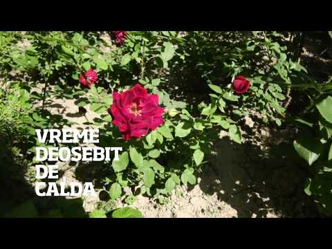 OBSERVATOR ANTENA 1 SLOBOZIA- METEO-24 MAI - YouTube