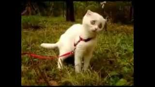 Кошка ест траву! ахахаха)))