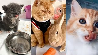 Cute Funny Cat Memes for Kids Forget about Troubles 2019   Funny Pet Compilation