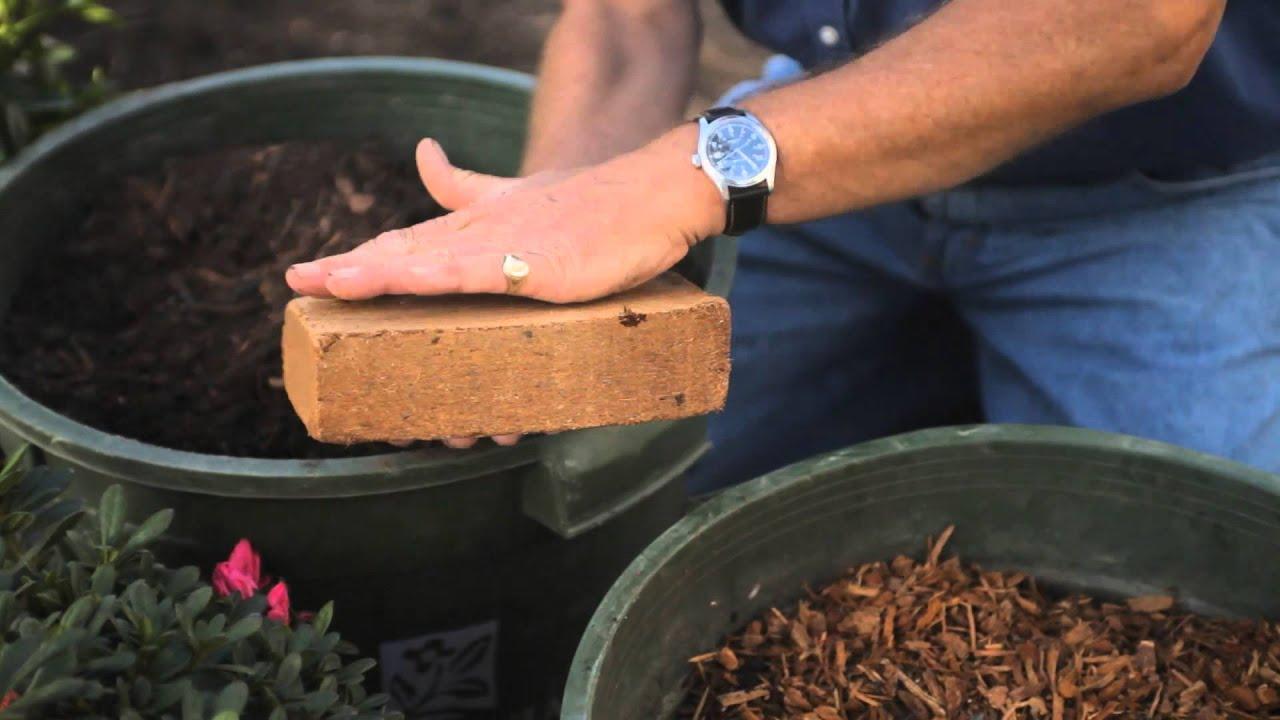 how to raise azaleas fall u0026 winter gardening tips youtube