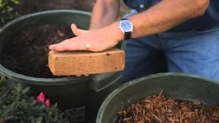 How to Raise Azaleas : Fall & Winter Gardening Tips