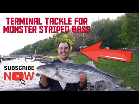 Pt1 Striper Fishing The Hudson River Terminal Tackle.