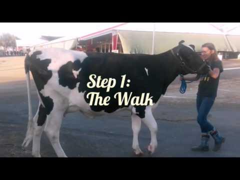 Dairy Heifer Showmanship 101