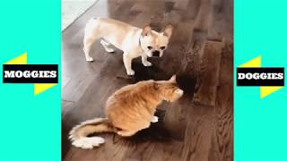 Dogs and Funny Cats Videos | Funny Animals Fails - Moggies & Doggies