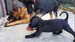 Все собаки любят кости. All dogs love bones. Райд и щенки.