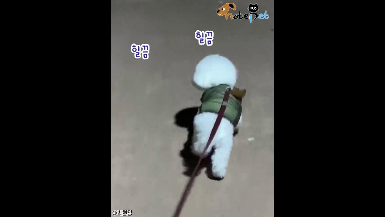 """산책 중 누나 잘 따라오나 '힐끔힐끔' 확인하는 강아지..""""잘 오고 있지?"""""""