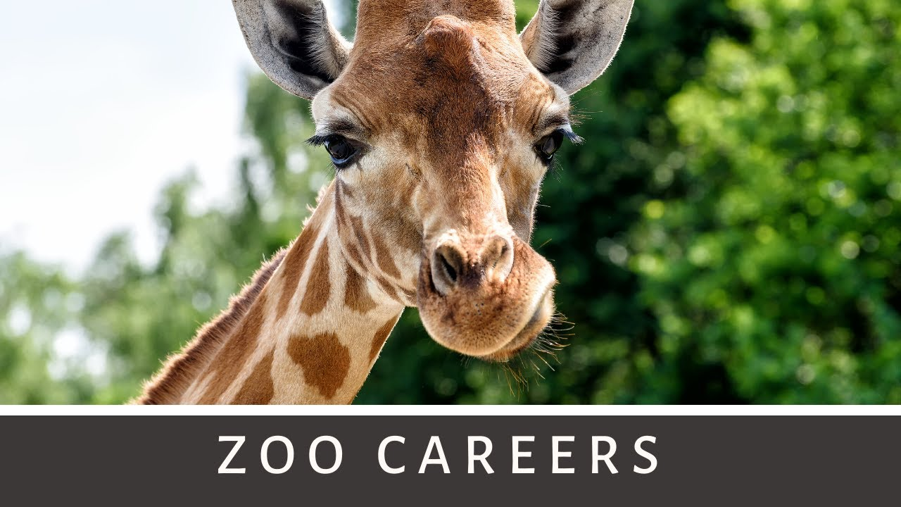 Zoo Careers Busch Gardens Camp 2014 YouTube