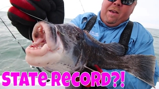 Catching Blackfish (Tautog) | Fishing for TOGZILLA!