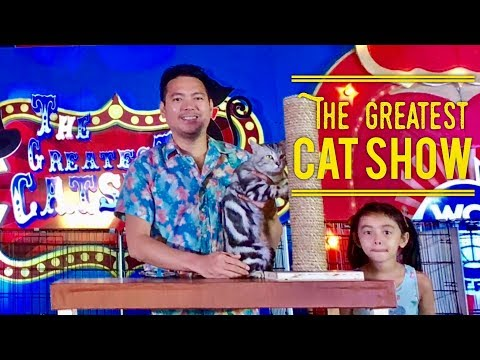 The Greatest Cat Show by The World Cat Federation GSIS Manila February 2019