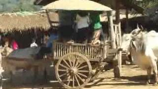 OX-CART-TRIP_CHIANGMAI_TOUR_WTH_LOCAL_CHIANGMAI_TOUR_GUIDE001.flv