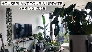 Houseplant Tour + Update -  Spring 2019