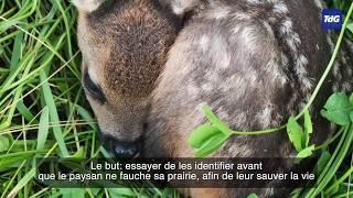 Des drones pour sauver Bambi des faucheuses