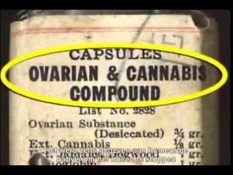 What If Cannabis Cured Cancer (1/5 - NL ondertitel / Dutch subs)