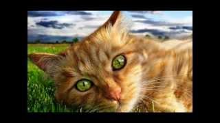 М.РЖЕВСКАЯ Когда я стану кошкой (M.Rzhevskaya When I'm a cat)