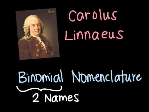 Classifications and Binomial Nomenclature