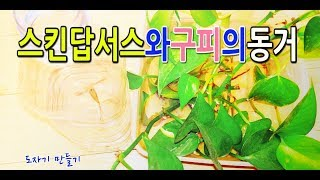 스킨답서스 수경재배(구피와함께키우기)