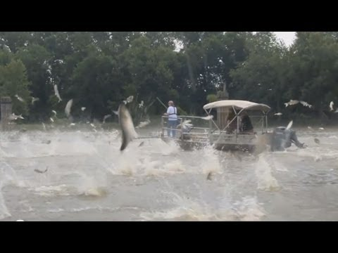 """Silent Invaders"" Asian Carp 2013"