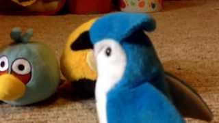 Angry birds meet the blue jay part 1/3