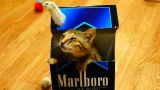 marlboroと猫