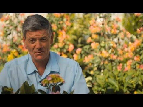 Aluminum Sulfate For Hydrangea Care : Garden Savvy