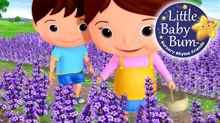 Little Baby Bum | Lavender's Blue Dilly Dilly | Nursery Rhymes for Babies | Songs for Kids