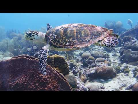 Barbados Carlisle Bay Marine Park Reefs and Wrecks click https://youtu.be/rPhNRdKoGrw