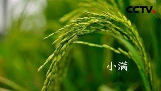 CCTV4-央视公益广告:赏二十四节气 品五千年文明 小满| CCTV中文国际