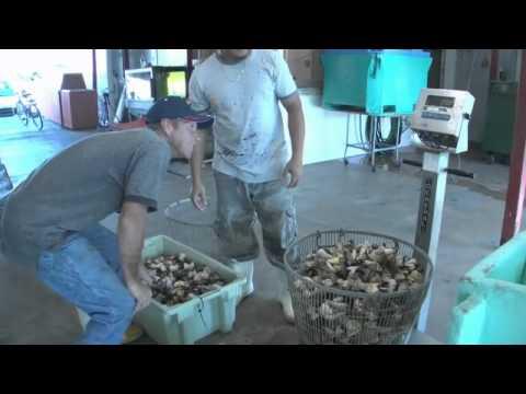 Stone Crab Fishing