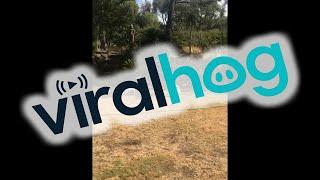 Dog Chases Its Friend with Sprinkler || ViralHog