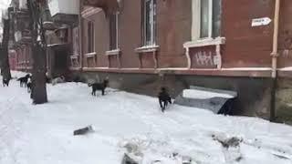 Смотреть Видео Юрий Христенко: собаки в центре города онлайн