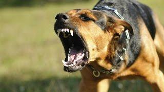 10 самых сильных собак в мире! Кузница Фактов.