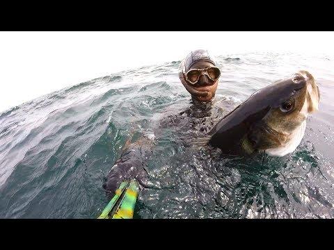 NEW  RECORD!!! Spearfishing in Black Sea Turkey 24 kg 3 fish,levrek , spigole, labrax , sea bass.