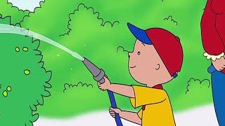 Caillou en Français  Caillou l&#39apprenti jardinier  NOUVEAU  dessin animé pour enfant  WildBrain
