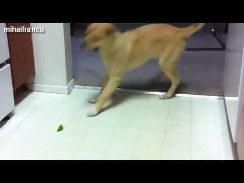 Анна Киреенко: Как собаки реагируют на цитрусовые