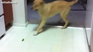 Как собаки реагируют на цитрусовые