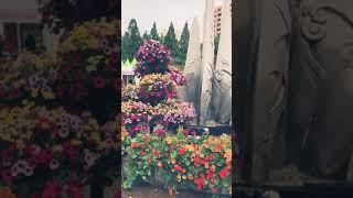 과천 축제 도시농업 체험관 - (주)시스매니아 방문기 (19.5.18)